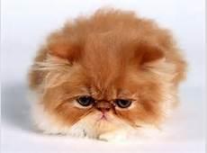 ぶさかわ猫①